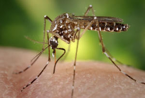 Attorney General Seizes Ex-UNM Official's Records, Mosquitoes That Can Carry Zika In Albuquerque | KUNM
