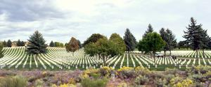 Governor Relaxes Occupational License Rules, State Holds Funeral For Forgotten Vets | KUNM