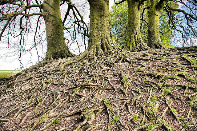 A neighborhood of tree roots