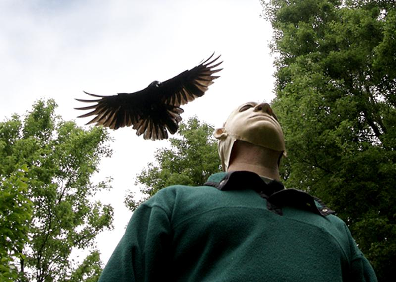 A crow dives on a researcher during a trial. Crows recognize people who have scared them or wronged them for years.