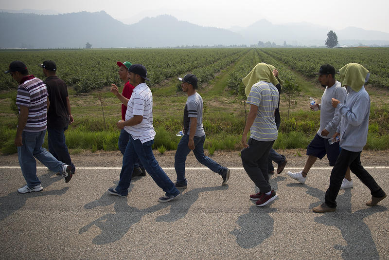Farmworkers march in protest of working conditions at Sarbanand Farms on Wednesday, August 8, 2017, after a fellow worker, Honesto Silva Ibarra, 28, died on Sunday. Click or tap on this image for more photos.