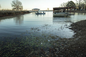 In Lake Fork, A Tiny Plant Threatens Trophy-Sized Fish, And A Way Of Life