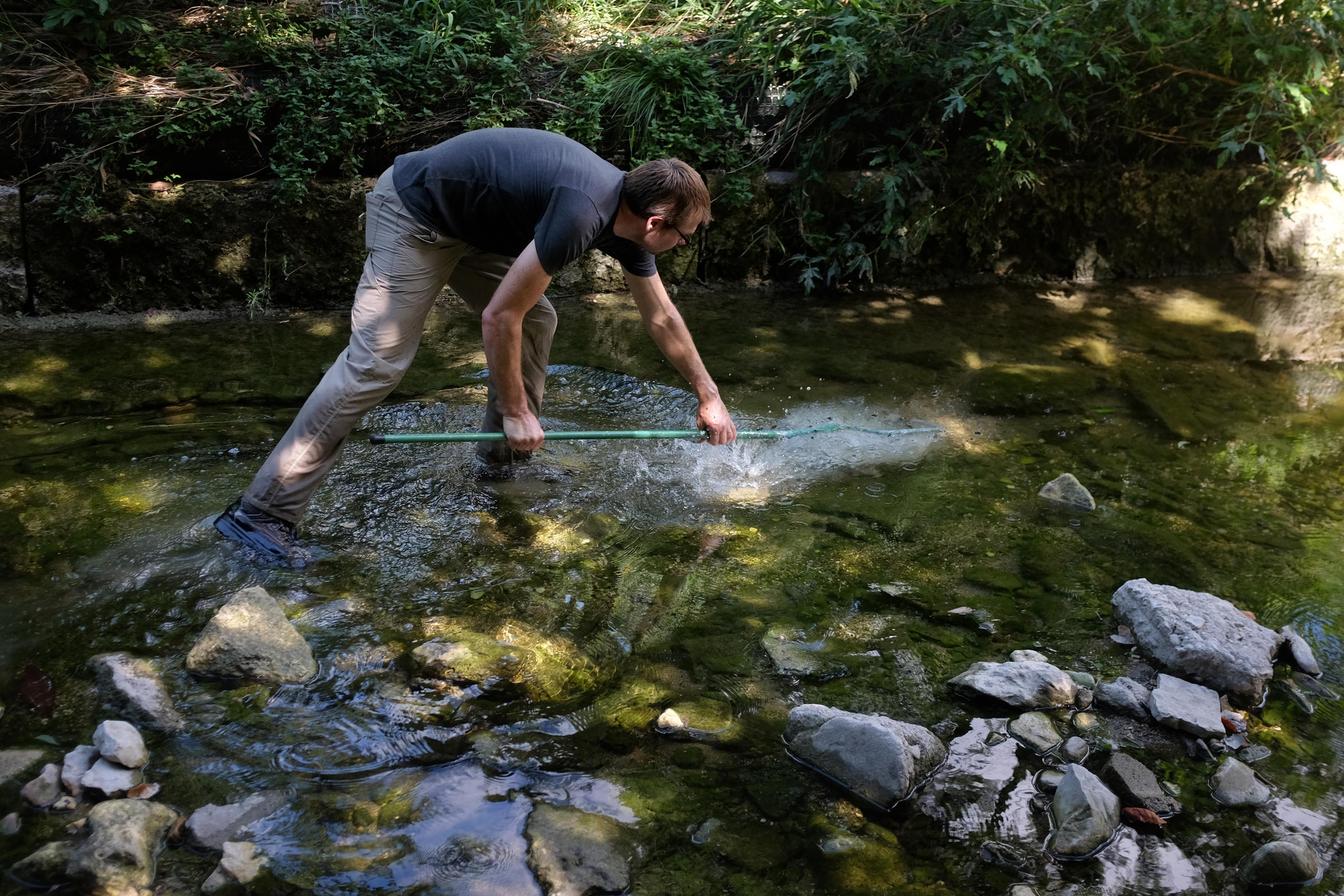 How Does This Aquarium Fish Thrive In Waller Creek? | KUT