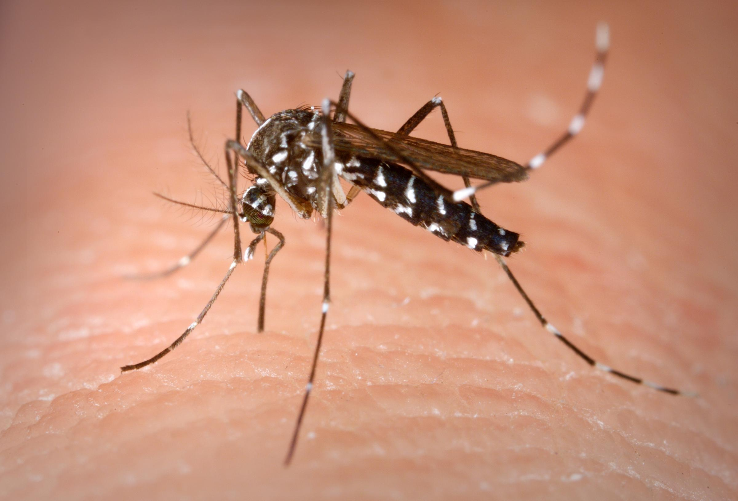Health Department finds West Nile at two area parks