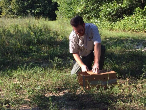 Missouri brings in ruffed grouse from Wisconsin to boost