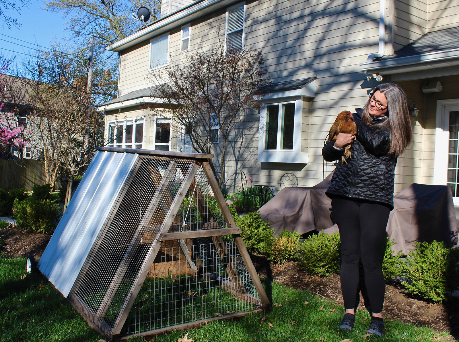 Urban Farming Chickens Rule The Roost In Many St Louis Backyards