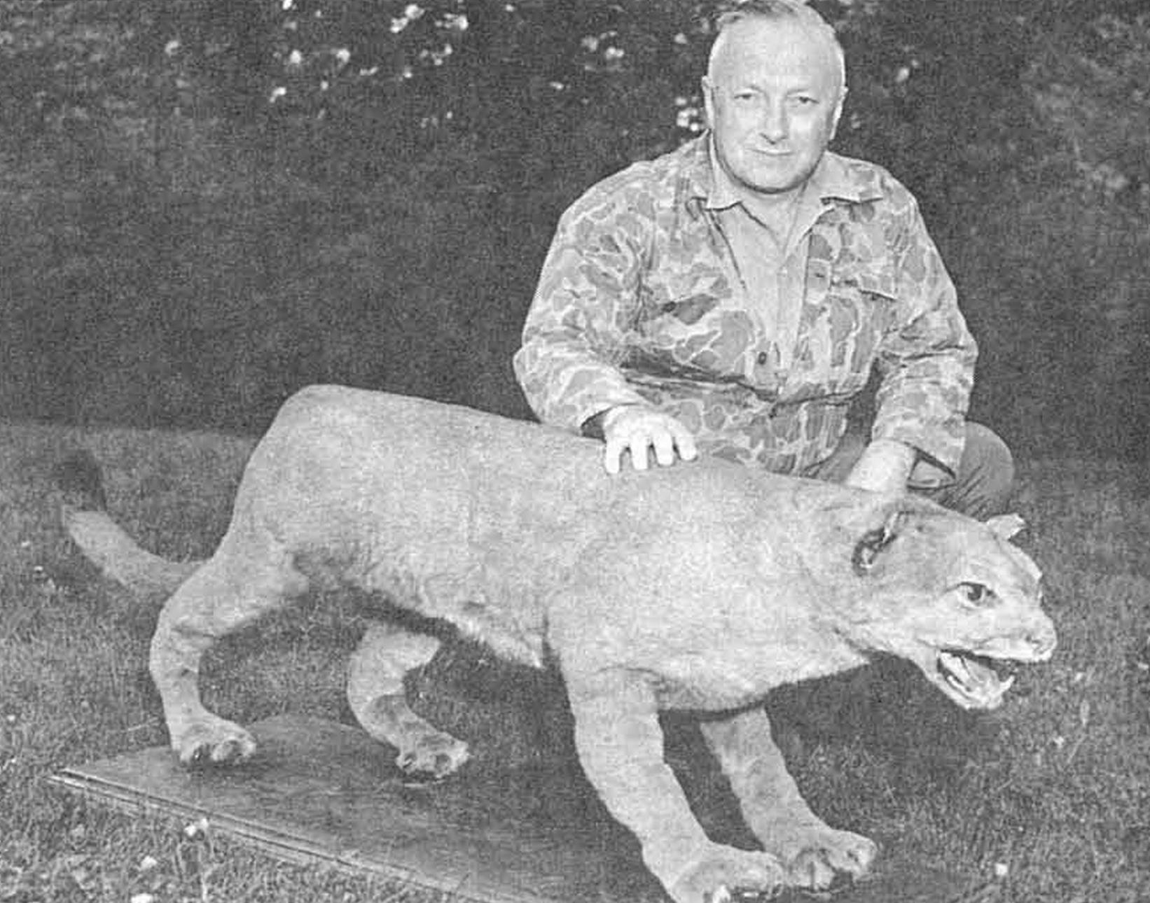 eastern puma in michigan