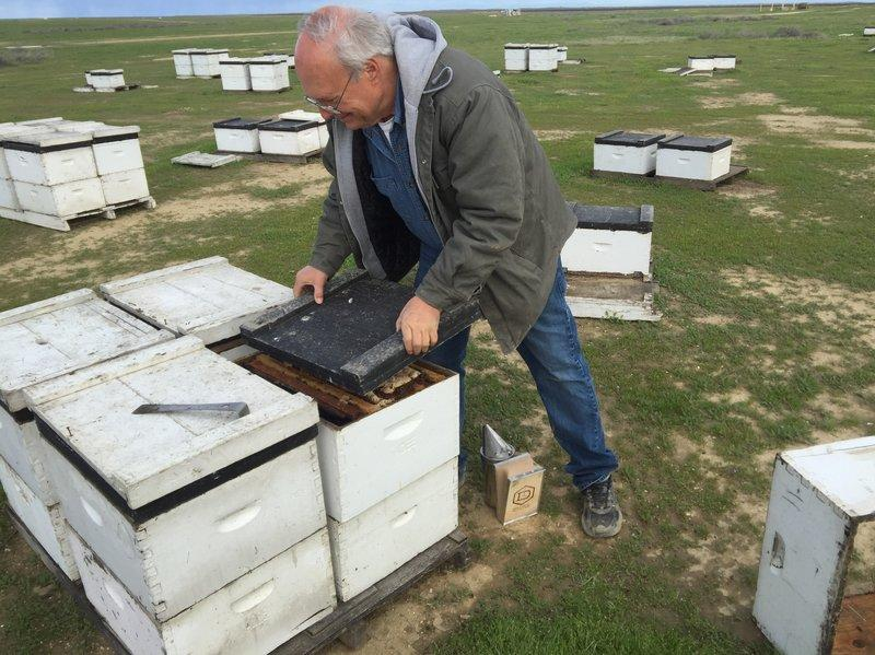 From Northwest Hives To California Almonds, Bee 'Deadout' Threatens