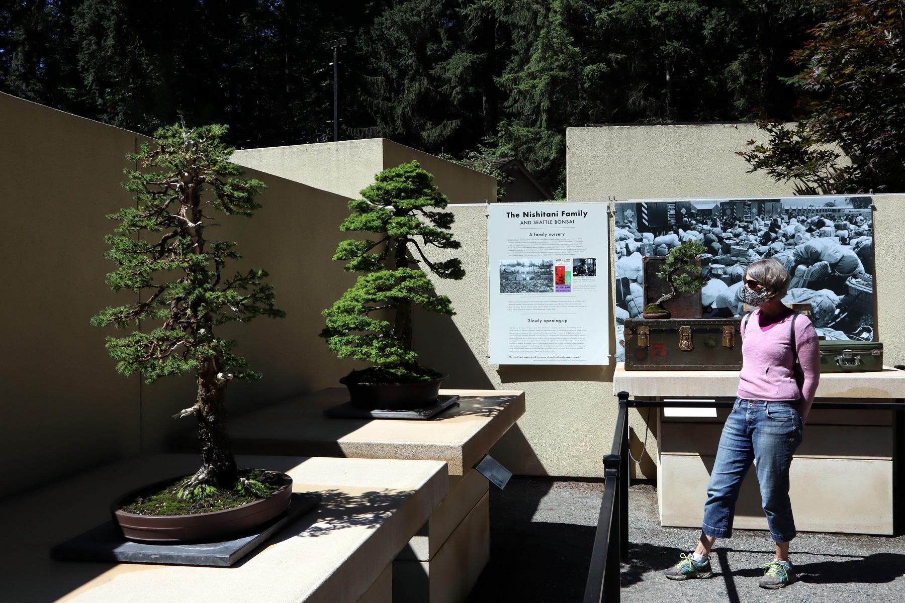 Bonsai Tree Exhibit Offers Novel Take On 75th Anniversary Of End Of World War Ii Nw News Network