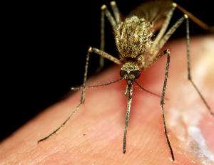 Health Officials Warn Montanans As West Nile Virus Resurfaces