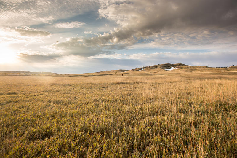 The Grasslands Are Growing Again In The Great Plains | KUNC
