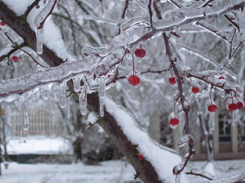 Winter weather   KNKX