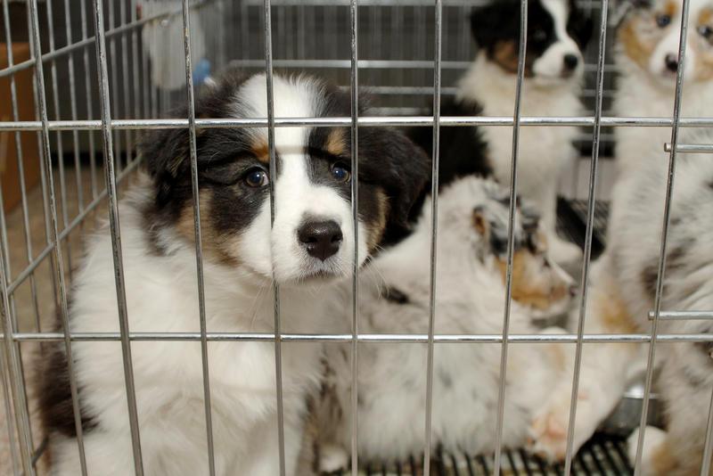 Puppy Mill Regulations Take Another Step Toward 2018 Ballot | WOSU Radio
