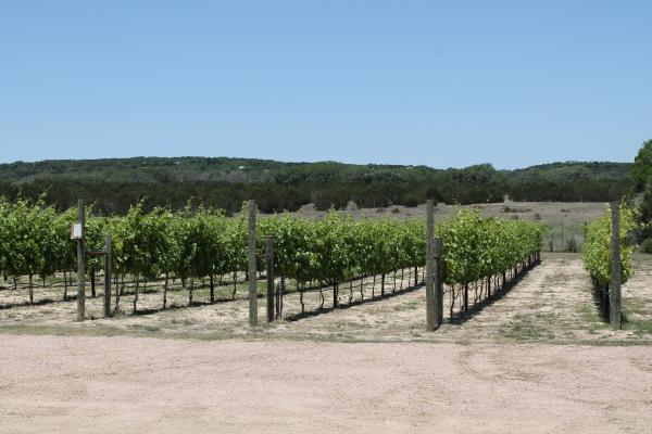 Vineyards at Bella Vista Ranch in Wimberley.