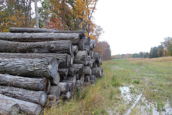 Logs from trees that were cut down on Baldwin's land. He requested that the Enbridge work crew leave the logs for him to use in his sawmill.