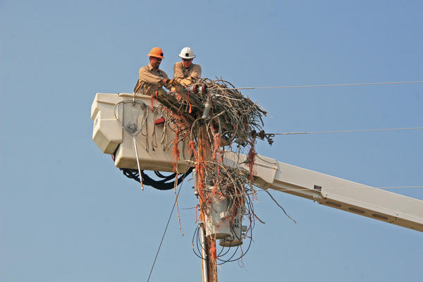 Missoula Electric Cooperative linemen George Porter and Eric Nicoson work on the nest.