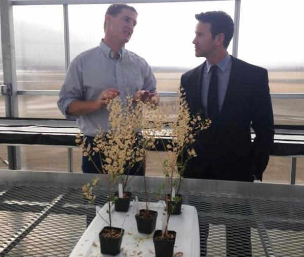WIU's Dr. Winn Phippen (left) talks with Congressman Aaron Schock (right) while examing Pennycress