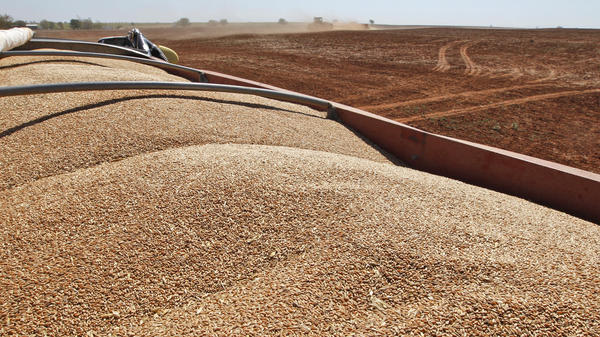 A truckload of seed wheat and rye awaits planting near Orlando, Okla., back in 2012, when the price per bushel of wheat was 50 percent higher than it is now.