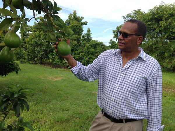 "Dr. Edward ""Gilly"" Evans, agricultural economist and green-skin avocado evangelist"