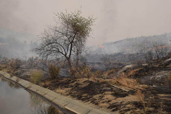 Fire scorched the banks of an irrigation canal about a half mile from Martin de la Rosa's cabin.Fire scorched the banks of an irrigation canal about a half mile from Martin de la Rosa's cabin.