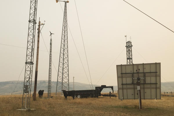 Jenni Bryce's cattle graze around her family's wind turbines and solar panels at her home near Belt, Mont.