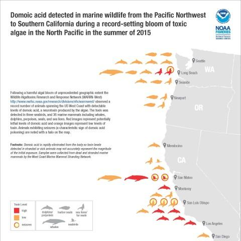 <p>Domoic acid in marine wildlife on West Coast during a record-setting bloom of toxic<br />algae in 2015.</p>
