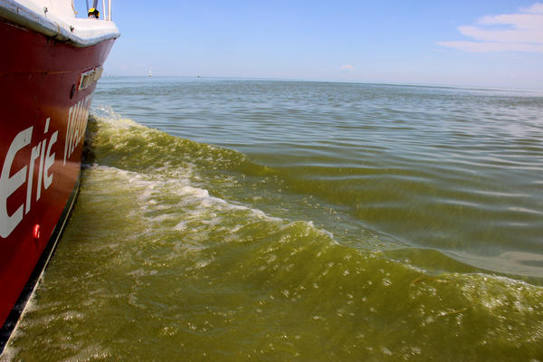 A shot from the Lake Erie Water Keeper's boat.