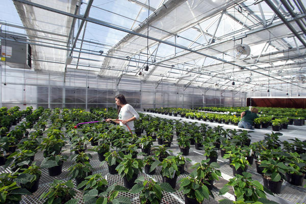 Students at Colorado State University care for plants in a greenhouse on campus in Fort Collins, Colo.