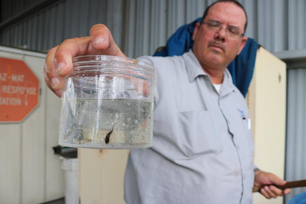Mosquitofish, like the one held by Jason Stuck, an entomology technician with Pinellas County Mosquito Control, are an environmentally safe option to control mosquito populations.