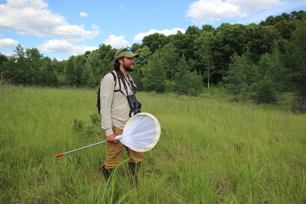Cale Nordmeyer searches for the endangered Poweshiek skipperling.
