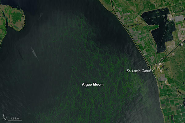 This is what the toxic blue-algae bloom looked like in Lake Okeechobee from above on July, 2, 2016.