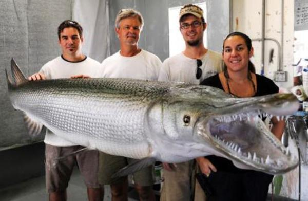 The biggest alligator gar ever caught. It weighed 327 pounds, measured 8.5 feet long and was more than 94 years old.