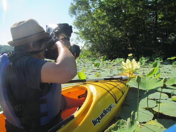 Jane Kramer photographing the American lotus.