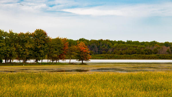 Shiawassee National Wildlife Refuge