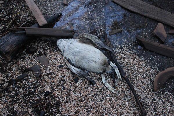 The carcass of a bird found on an Upper Peninsula beach.