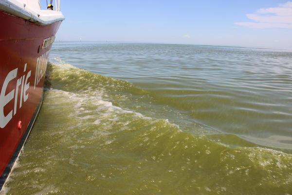 A cyanobacteria bloom on Lake Erie in 2013.