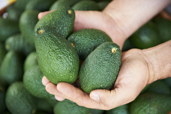 Some are worried President Donald Trump's proposed 20 percent tax on all goods imported from Mexico will raise prices on items like avocados.
