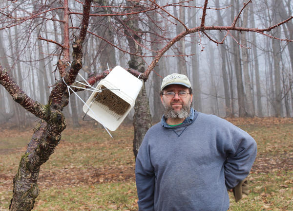 """The honey bees that usually pollinate tart cherry trees are vulnerable to erratic spring weather. So, Todd Springer has made hives out of buckets for the more resilient horn-faced bees, which will pollinate his trees even in inclement weather. Springer calls the bees his """"pollinator insurance."""""""