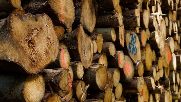 In April, the Trump administration placed tariffs on softwood lumber coming from across the border.