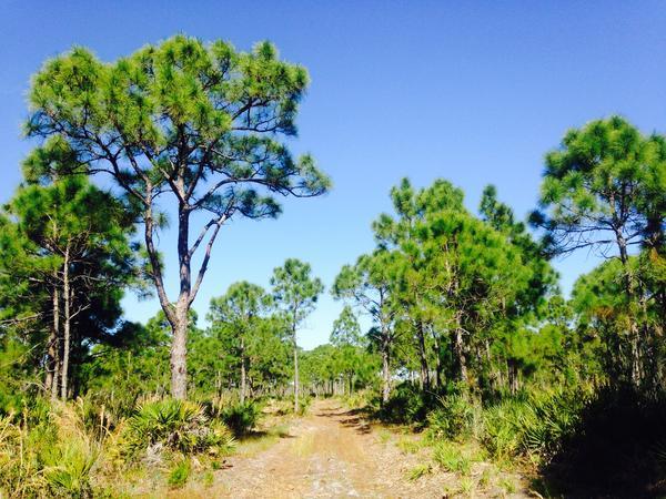 Pine Island Flatwoods Preserve, Lee County