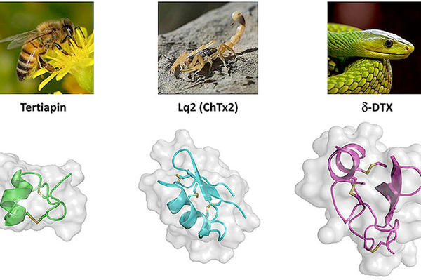 Some of the animals that produce venom and the peptides inside it that can be bio-engineered to treat diseases.