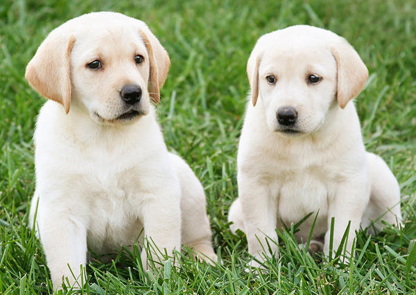 These two probably don't have it, but the CDC says any puppies and dogs can carry the Campylobacter germ.