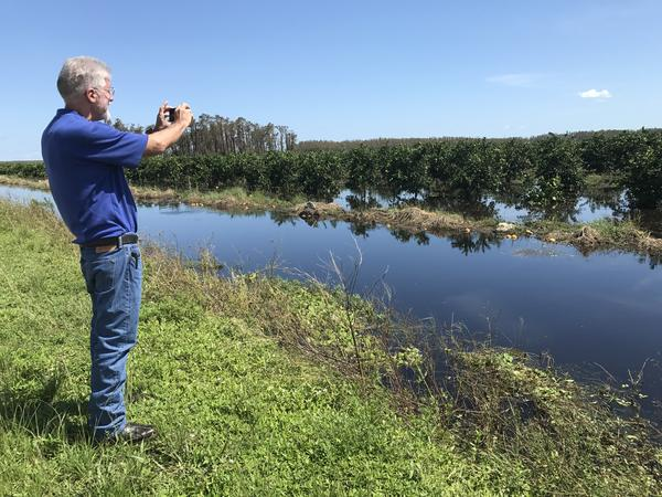 UF agriculture extension agent in Hendry County Gene McAvoy taking pictures of flooded citrus groves. He's helping local growers and farmers document damages from Hurricane Irma.