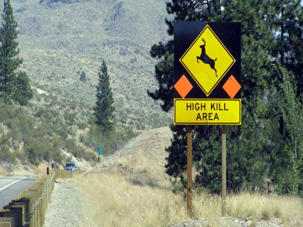 Washington state made ''roadkill salvage'' legal in 2016.