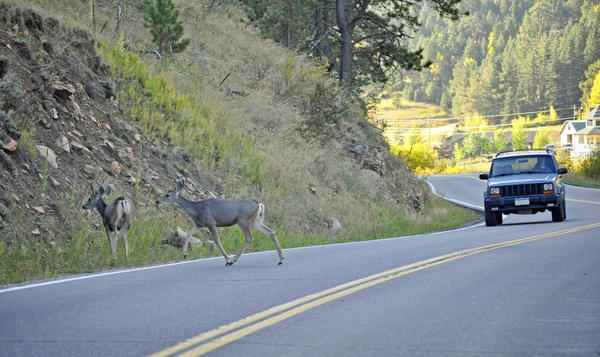 """Don't veer for deer,"" Shaw said about encountering deer on the road."