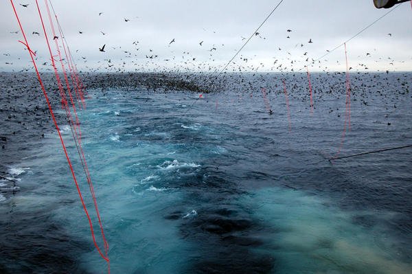 Bird-scaring lines at work on a trawl vessel in Alaska.