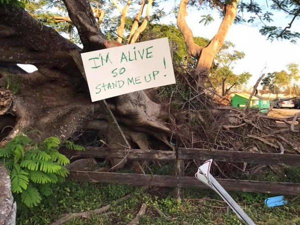 A homemade sign begs help for a downed tree in Kendall's Devon Aire Park, two months after Hurricane Irma swept through South Florida.