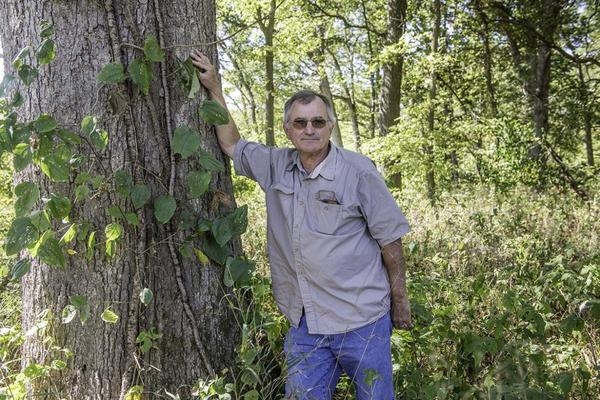 Lou Nelms, a retired biologist, stands next to an oak tree in Atlanta, Illinois, that may have been damaged by herbicide drift.