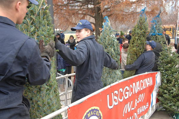 Trees brought from the Mackinaw.
