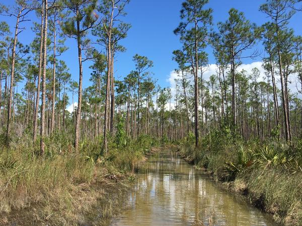 Water runs high on the Long Pine Key Trail in the Everglades.